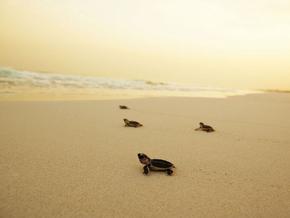 Séjour plage