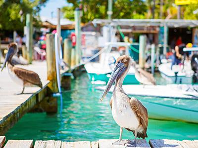 Séjour à Key West