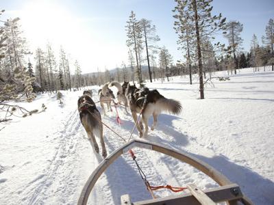 Balade en traîneau à chiens en Laponie