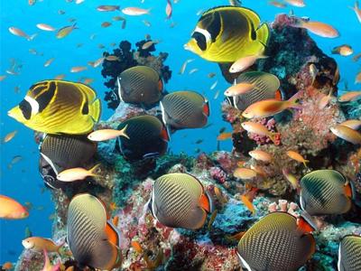 la vie sous marine de l'atoll de raa
