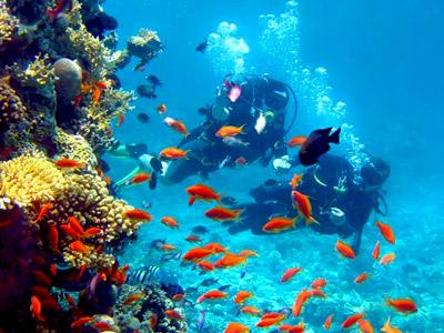 Plongée au Mexique