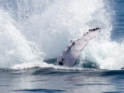 Baleine à las Terranas