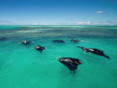 iles-des-seychelles - Photo