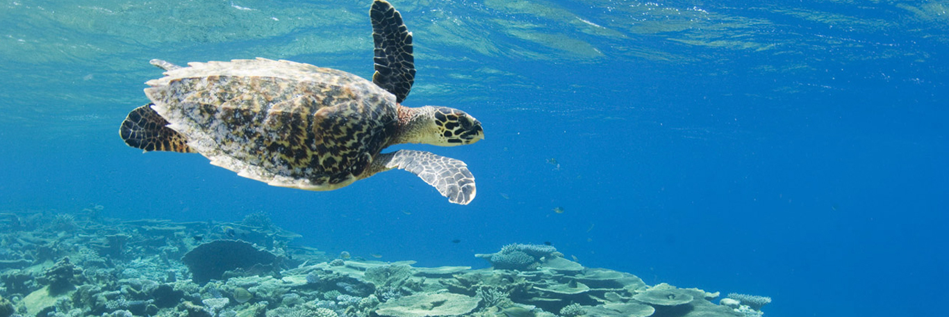 Atoll d'Huvadhoo aux Maldives