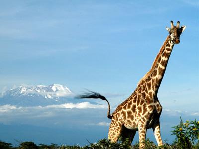Safari dans le Parc national d'Arusha