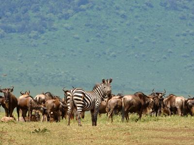 Safari au Ngorongoro