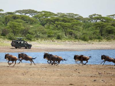 Safari au Parc national de Tarangire