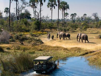 Safari privé dans les parcs nationaux en Tanzanie