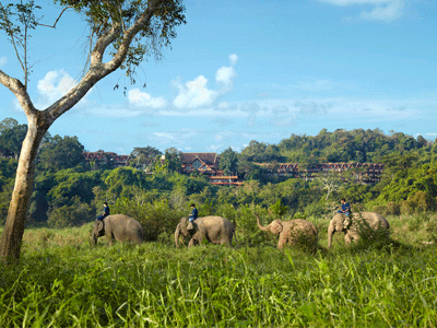 Les éléphants de l'Anantara Golden Triangle | Anantara