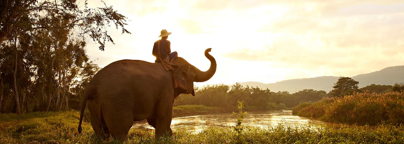 Les éléphants de l'Anantara Golden Triangle Thaïlande