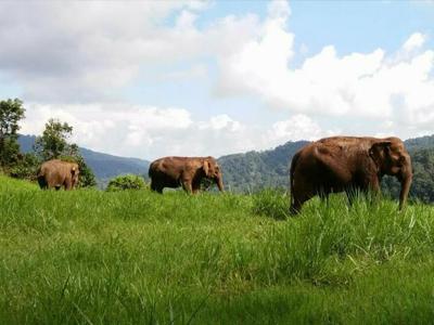Les éléphants dans leur milieu naturel | Elephant Nature Park