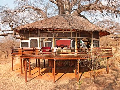 Lodge dans les arbres en Tanzanie | Tarangire treetops