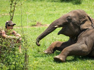 Des moments inoubliables | Elephant Haven
