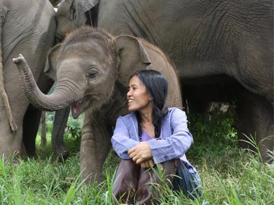 Lek Chailert au milieu des éléphants | Elephant Nature Park