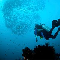 La plong e bali les plus beaux sites d couvrir avec - Prix plongee bali ...