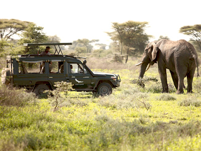 Safari en Tanzanie | and beyond