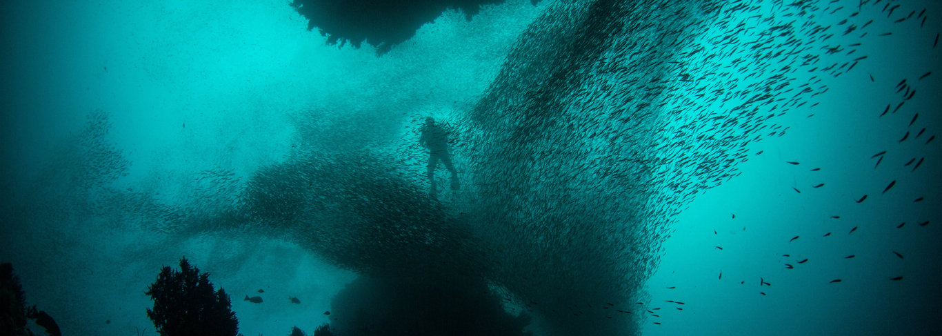Les fonds-marins de Zanzibar