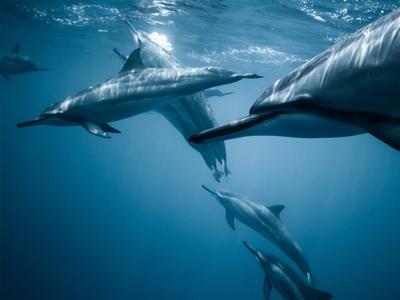 Rencontre avec les dauphins | Jeremy Bishop