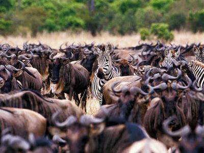 image tanzanie migration | andBeyond