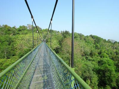 La Tree Top walk dans le parc MacRitchie | OT Singapour