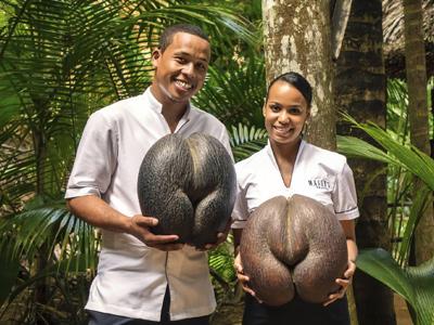 Coco fesse de la Vallée de Mai à Praslin | Masons