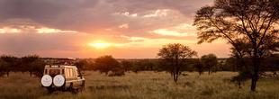 Safari dans la brousse en tanzanie