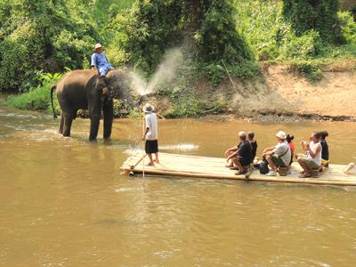 Camp d'éléphants de Chiang Dao