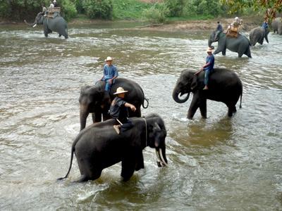 Cascade et trekking à dos d'éléphant