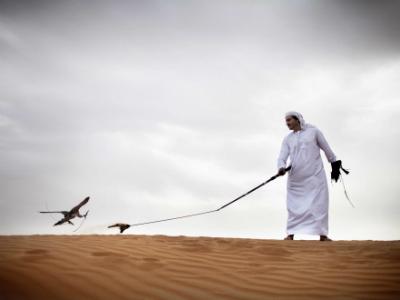 Faucon dans le désert
