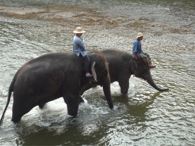 Balade à dos d'éléphants - nautil