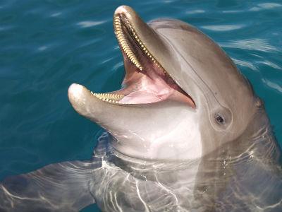 Nager avec les dauphins à Moorea