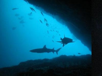 Plonger avec les requins à Gili Biaha