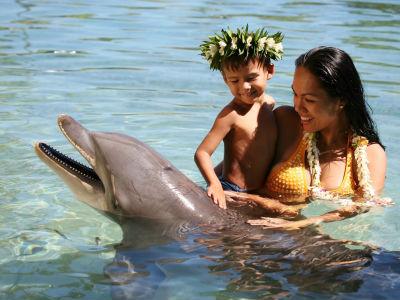 Rencontre avec un dauphin à Moorea