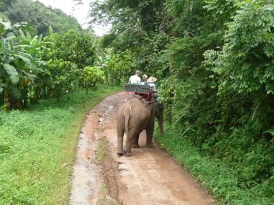 Safari à dos d'éléphant