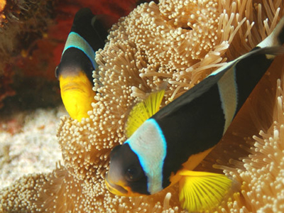 OT-Seychelles ©Elizabeth Fideria