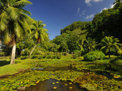 Excursion à Tahiti