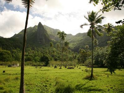 Excursion sur l'île sacrée Raiatea