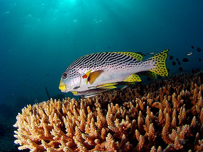 Banana Reef (Nazir Amin/ Flickr)
