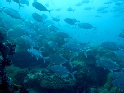 Chaweng Reef - David Rubin