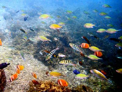 Coral Gardens Wall (Gareth Williams / Flickr)