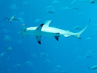 Dr John's Reef (Josh Hallett / Flickr)