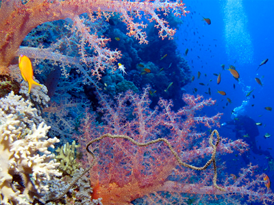 Fairyland Reef (Derek Keats / Flickr)