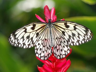 Ferme aux Papillons (Office du Tourisme de Saint-Martin / Flickr)