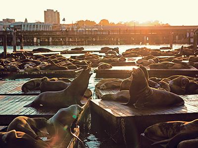 Fisherman's Wharf & le Pier 39