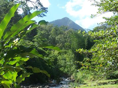 La Forêt de cœur Bouliki