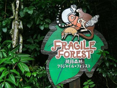 Fragile Forest (shankar s. / Flickr)