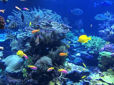 Gerdener's Reef (librtybeth / Pixabay)