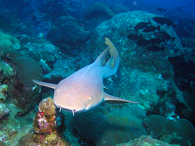 Grotte aux Requins Dormeurs (NOAA Photo Library / Flickr)