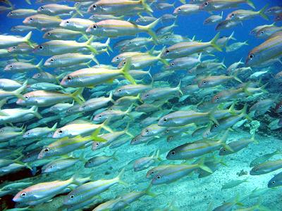 Hon Cau (NOAA Photo Library / Flickr)