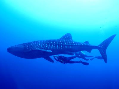 Hukuruelhi (LUX* Maldives)